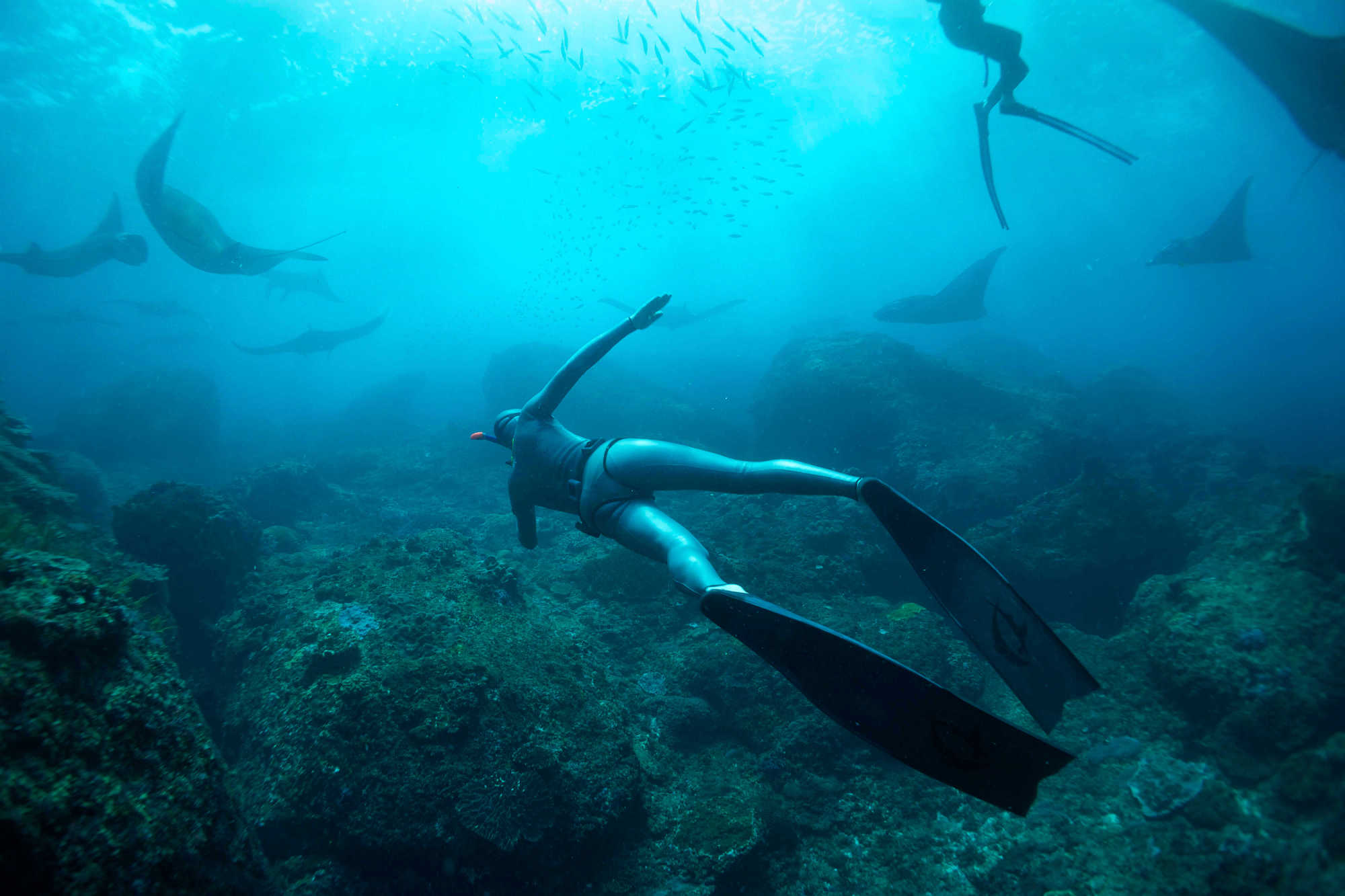 Picture of freediving mantapoint