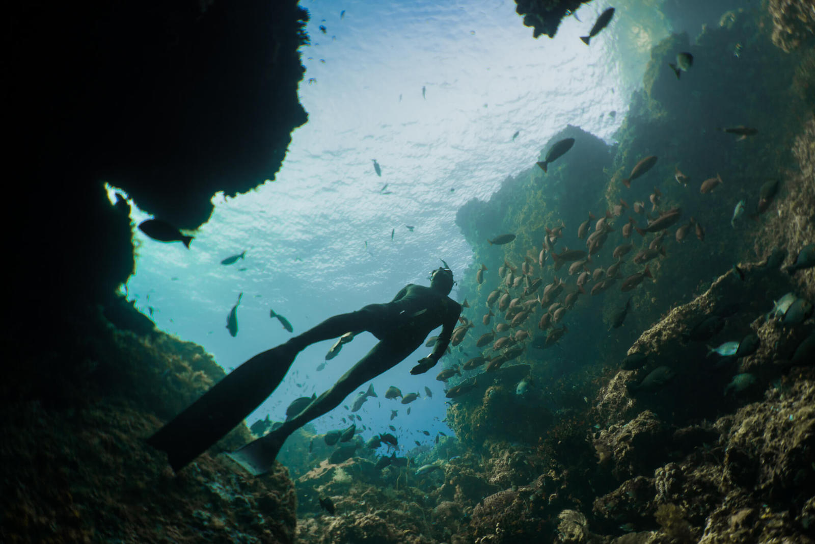 Freediver in Liberty Wreck