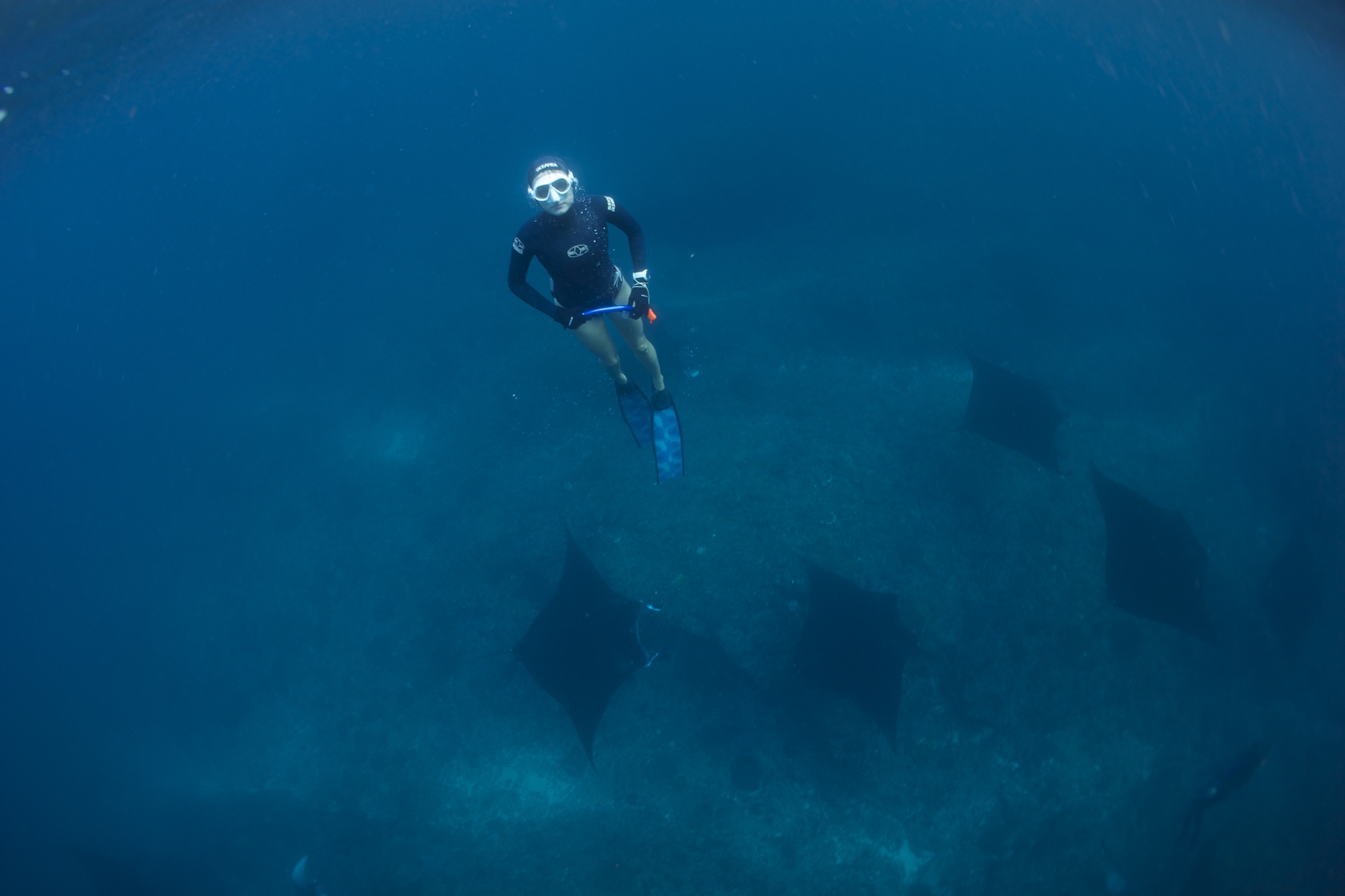 Picture freediving with mantas