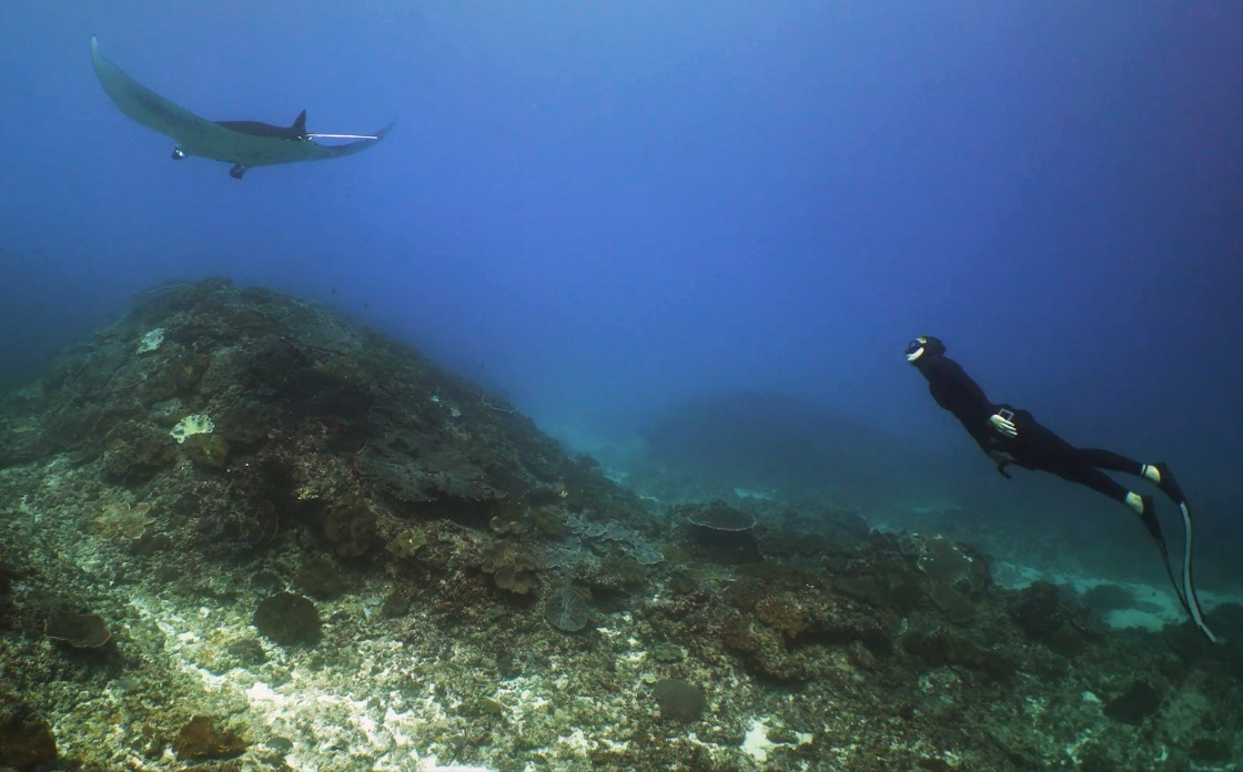 Freediver in front of manta ray