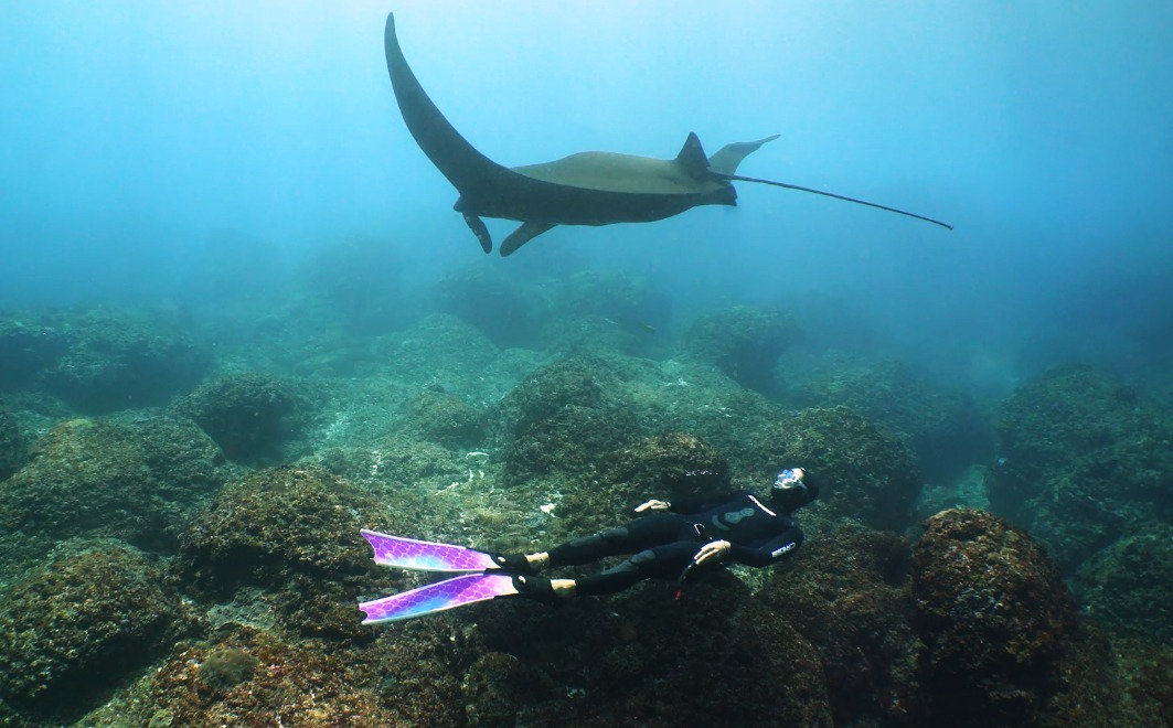 Freediver Diving with manta in bali