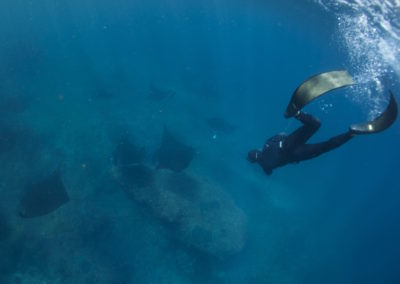 Picture of freediving with mantas